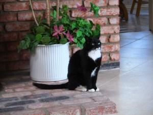 My Sweet Freddie